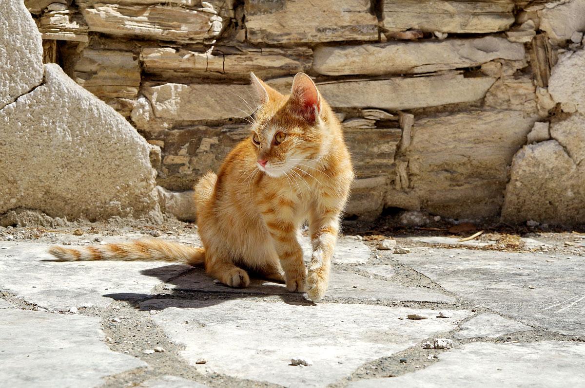 Zypern Deine Katzen Fee Ist Mein Name