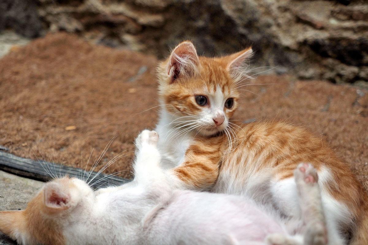 Zypern, deine Katzen | Fee ist mein Name